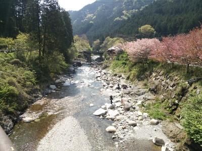 特別放流時の大芦川の釣り人