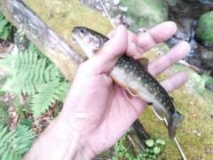 岩魚20cm