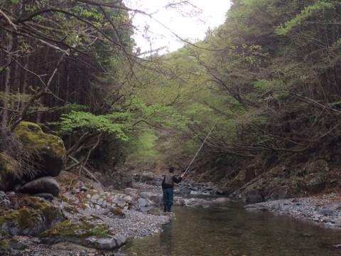 東大芦川でテンカラ竿を振る