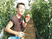 もぎたての完熟トマトをガブリ