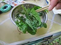 タンポポ他、野草を天ぷらに