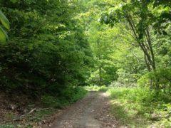 沢沿いを走る林道