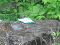 対岸に放置されたマシュマロの袋