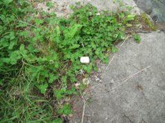 足元に落ちていたマシュマロの残骸