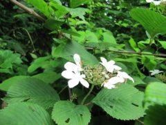 七入オートキャンプ場入口に咲いていた花