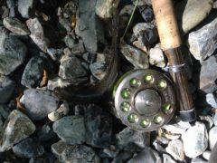 フライで釣った岩魚