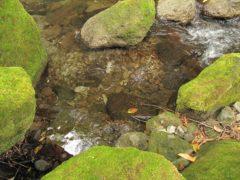 岩魚の定位していた場所