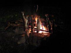 焚き火でイワナを焼き枯らす