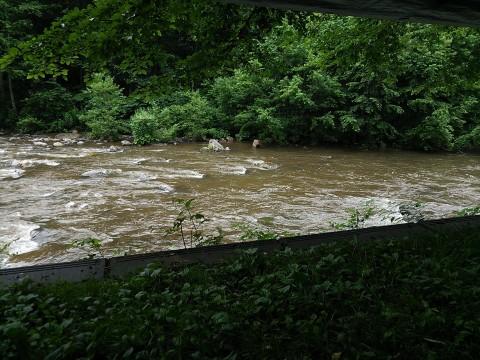 雨は降り続いているが、濁りが取れつつある実川の流れ