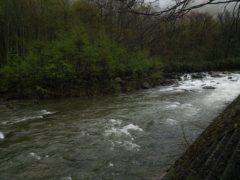 キャンプ場前GWの実川の状況