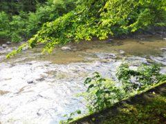 本日の実川の水量