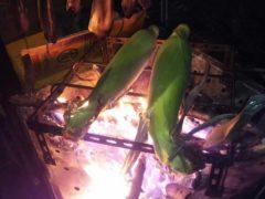 トウモロコシを焚き火で焼く