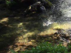 魚の水しぶき