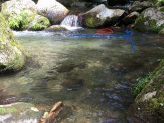 水の流れと魚が潜んでいた場所