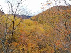 モーカケの滝に向かう登山道