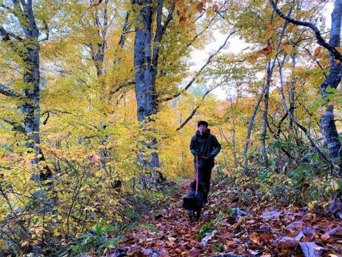 紅葉の中、犬を散歩