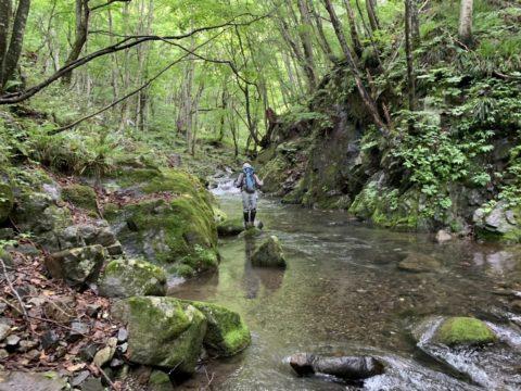 穏やかな流れの渓を遡行する