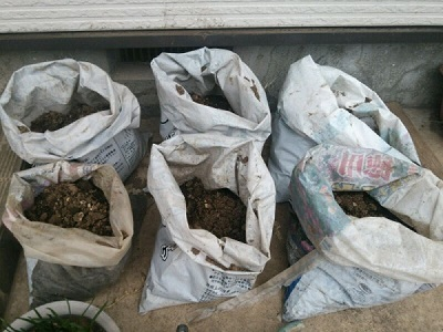 肥料袋でじゃがいも栽培
