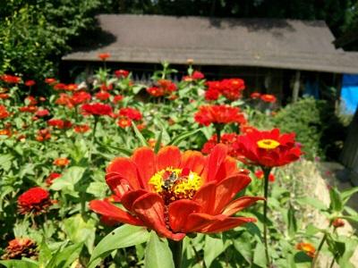 裏庭の風景