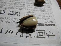 殻の中はこんな感じ