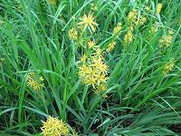 名前の解らない黄色い花
